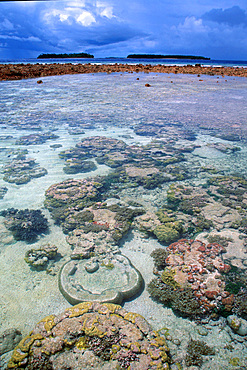 Coral reef during low tide in lagoon, Mili, Marshall Islands (N. Pacific).