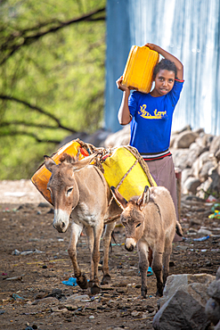 A pair of donkeys and a young ethiopian girl carry plastic containers down a dirt street, Debre Berhan, Ethiopia