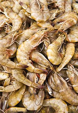 Fresh shrimp for sale in the shrimp market in downtown Mazatlan, Sinaloa, Mexico.