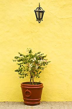 Bougainvillea plant, lamp and yellow wall; Cosal·, Sinaloa, Mexico.