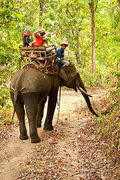 Visitors on elephant ride at National Thai Elephant Conservation Center; Lampang, Chiang Mai Province, Thailand.