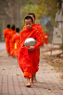 Young Buddhist monks on their morning procession for offerings of food near a monastery in the Huay Kaew area of Chiang Mai, Thailand.