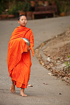 Young Buddhist monk on morning procession for offerings of food; Huay Kaew area, Chiang Mai, Thailand.