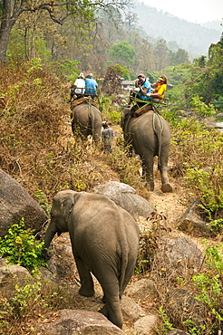 Mae Tang Tours elephant ride in rural Chiang Mai Province, Thailand.