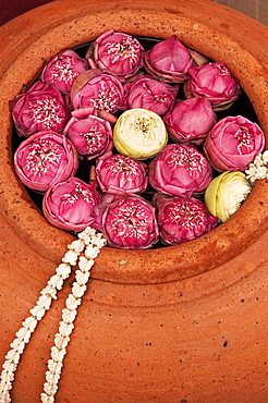 Lotus blossoms in terracotta pot at Siam Niramit; Bangkok, Thailand.