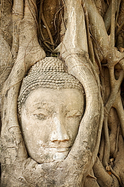 Stone Buddha head embedded in bodhi tree roots at Wat Mahathat Buddhist temple ruins, Ayutthaya, Thailand.