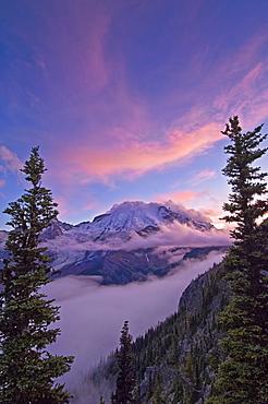 Mount Rainier from Glacier Overlook on Sunrise Rim Trail; Sunrise area, Mount Rainier National Park, Washington.