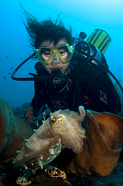 A diver interacts with a cuttlefish, Sepia sp., Lembeh Strait, Manado, North Sulawesi, Indonesia, Pacific Ocean