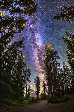 The summer Milky Way with the Summer Triangle stars through pine trees, shot from the Howse Pass Viewpoint at Saskatchewan River Crossing, Banff National Park, Alberta. Jupiter is the bright object at the bottom.