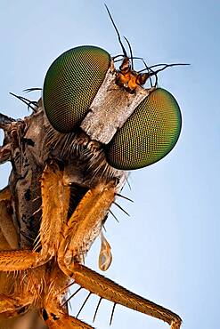 A Longlegged fly;  they will catch your attention with their bright green metallic eyes