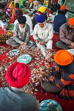 Volunteers preparing onions for cooking to do meals for the pilgrims who visit the Golden Temple, Each day, they serve free food for 60,000 - 80,000 pilgrims, Golden temple, Amritsar, Punjab, India