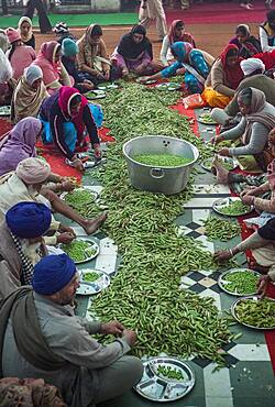 Volunteers preparing broad beans for cooking, to do meals for the pilgrims who visit the Golden Temple, Each day, they serve free food for 60,000 - 80,000 pilgrims, Golden temple, Amritsar, Punjab, India