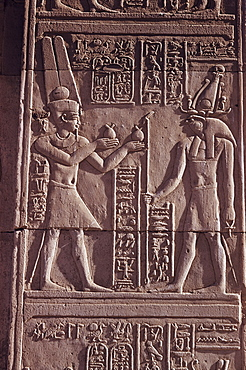 Ptolemaic low relief of the hawk-headed god Horus presented with offerings, Temple of Sobek and Haroeris, Kom Ombo, Egypt, North Africa, Africa