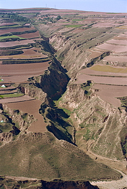 Terracing at harvest time, near Lanzhou, Gansu Province, China, Asia