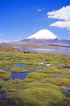 Chile, Andes, Lauca National Park, Lake Chungara And Volcan Parinacota, 6300m