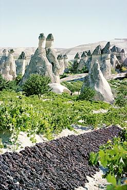 Grapes drying, vineyard and cone houses, Cappadocia, Anatolia, Turkey, Asia Minor, Asia