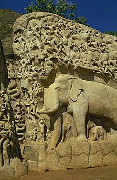 Reliefs at Mahabalipuram, UNESCO World Heritage Site, near Madras, India, Asia - 2-4304