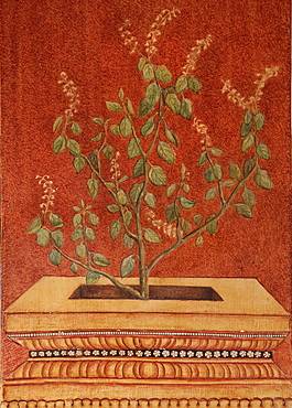 Painting of Tulsi (Holy Basil) (Ocimum tenuflorum) an important symbol in Hindu traditions and an Ayurvedic ingredient used for colds, headaches, stomach disorders, inflammation and heart disease