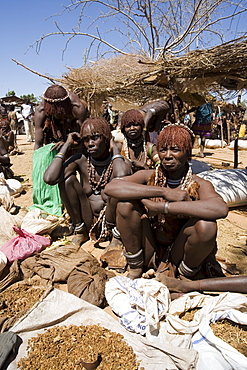 Women of the Hamer tribe, their hair treated with ochre, water and resin and twisted into tresses known as goscha, Lower Omo Valley, southern Ethiopia, Ethiopia, Africa