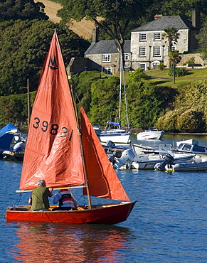 Sailing, Salcombe harbour, South Hams, Devon, England, United Kingdom, Europe
