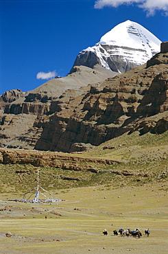 Yak train approaches Tarboche, prayer flag pole in Lha Chu canyon, on the kora round sacred mountain, Mount Kailas (Kailash), Tibet, China, Asia
