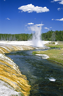 Cliff Geyser erupts from geyserite bank on edge of Firehole River through Black Sand Basin, Yellowstone National Park, UNESCO World Heritage Site, Wyoming, United States of America (U.S.A.), North America