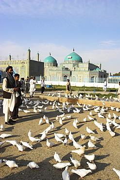 People feeding the famous white pigeons, Shrine of Hazrat Ali, Mazar-I-Sharif, Balkh province, Afghanistan, Asia