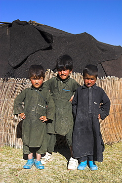 Aimaq boys in front of yurt, Aimaq nomad camp, between Chakhcharan and Jam, Pal-Kotal-i-Guk, Afghanistan, Asia