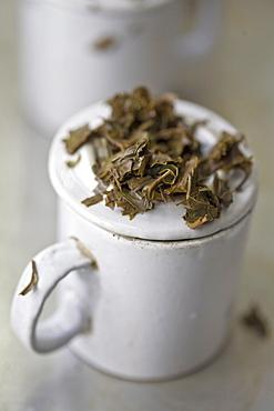 Tea tasting, Factory, Goomtee Tea Estate, Kurseong, West Bengal, India, Asia