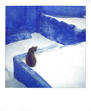 Polaroid of a cat sitting on whitewashed path, Chefchaouen, Morocco, North Africa, Africa