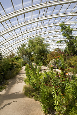 Chilean and Californian area of the Great Glasshouse, National Botanic Garden of Wales, Llanarthne, Carmarthenshire, Wales, United Kingdom, Europe