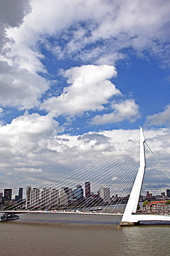 The Erasmus Bridge (The Swan) across the New Meuse River, Rotterdam, Netherlands, Europe