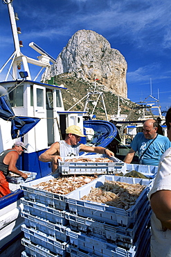 Fish being landed, Calpe, the Penyal d'Ifach (Penon de Ifach) towering above the harbour, Alicante, Valencia, Spain, Europe