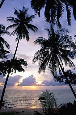 Sunset framed by palms, Patong, Phuket, Thailand, Southeast Asia, Aisa