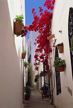 Bougainvillea in a narrow whitewashed street in upper village, Mojacar, Almeria, Andalucia (Andalusia), Spain, Europe