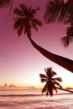 Palm trees silhouetted against pink evening sky, Anse Takamaka, Takamaka district, Island of Mahe, Seychelles, Indian Ocean, Africa