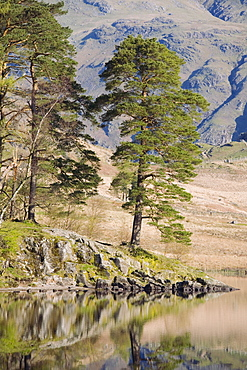 Early morning reflections, Blea Tarn, above Little Langdale, Lake District National Park, Cumbria, England, United Kingdom, Europe