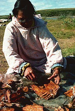 Dried whitefish cleaned and cut after drying, Eskimo whaling camp, taken in the 1970s, Beaufort Sea, Northwest Territories, Canada, North America