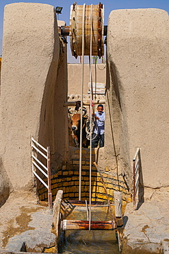 Man and bull draw water from their well, Varzaneh, Iran, Middle East