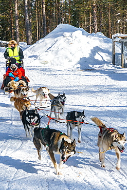 Six husky dog team with sled, driver and two passengers, Husky Farm, Torassieppi, Lapland, Northern Finland, Europe
