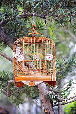 Caged bird, Yuen Po Street Bird Garden, Mong Kok, Kowloon, Hong Kong, China, Asia