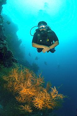 Diver swimming underwater along the wall at Sipadan Island, Celebes Sea, Sabah, Malaysia, Southeast Asia, Asia