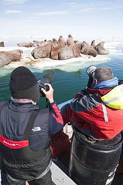 Tourists photographing a group of walrus (Odobenus rosmarus) resting and sunbathing, Arctic Kingdom walrus expedition, Foxe Basin, Nunavut, Canada, North America