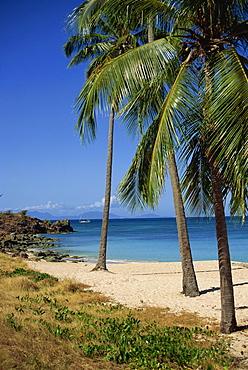 Palm trees, Blue Heron Beach, Antigua, Leeward Islands, West Indies, Caribbean, Central America
