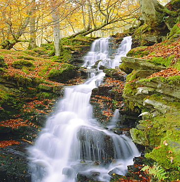 Birks of Aberfeldy, Tayside, Scotland, UK, Europe
