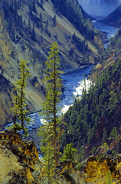 Grand Canyon, Yellowstone National Park, UNESCO World Heritage Site, Wyoming, United States of America (U.S.A.), North America