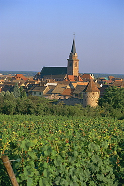 Bergheim and vineyards, Alsace, France, Europe