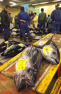 Large tuna fish on trolley with buyers in background, tuna auction, Tsukiji fish market, Tokyo, Honshu, Japan, Asia