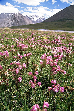 At the border to China, Karakoam Highway, Pamir, Pakistan, Asia