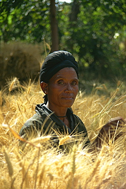 Woman harvesting crops by hand, Soddo, Ethiopia, Africa